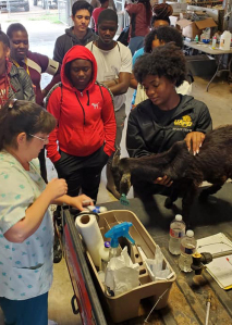 UAPB offering summer veterinary camp for highschool students